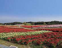 グループホーム くるま花水木(兵庫県淡路市)イメージ